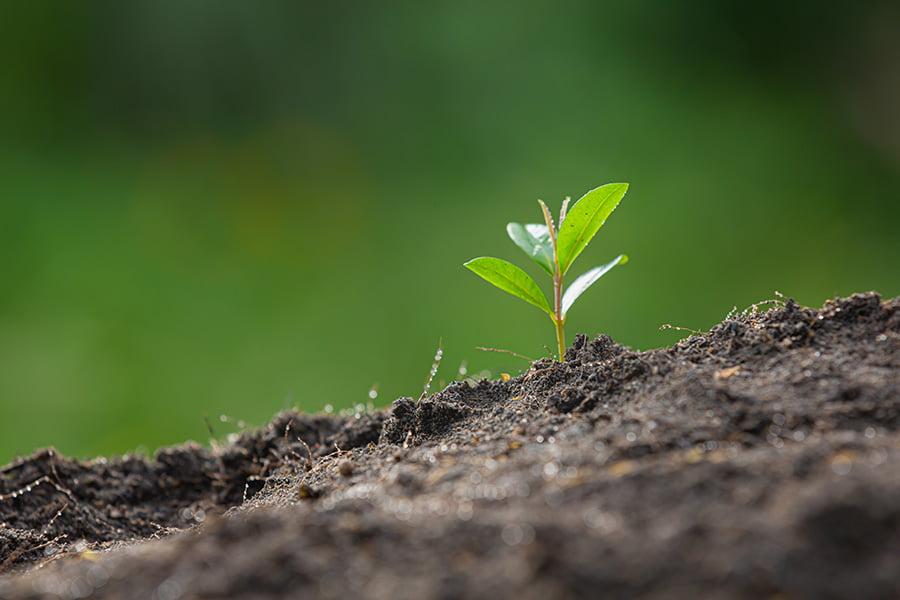 Cuidar el medio ambiente   Provaiser